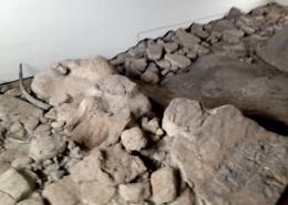 museo-pleistocene_Fuoriporta