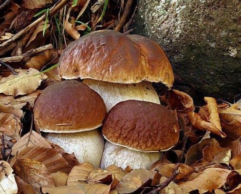 Autunno in Alta Valtaro: voglia di castagne e funghi