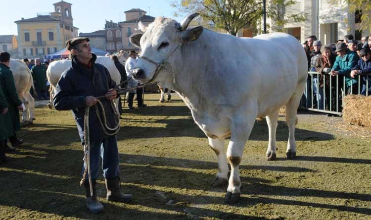 Carrù (CN) celebra il bollito piemontese con la Fiera del bue grasso – 8  dicembre 2084ae12f2e4