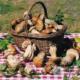 Autunno: zucca, riso e funghi, colorano e profumano l'Italia