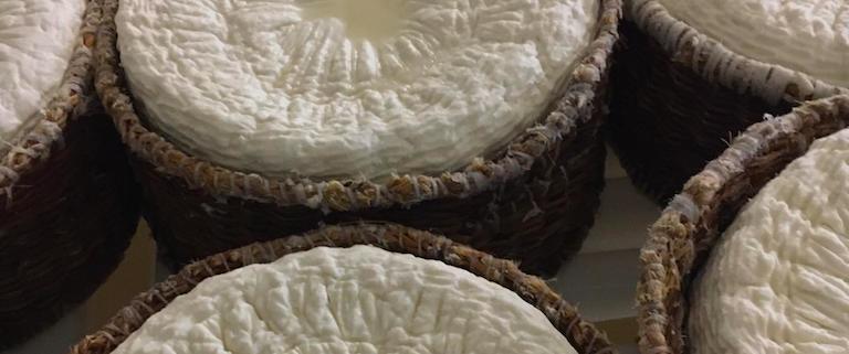 Rosa e l'arte di far formaggio a