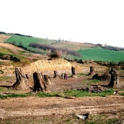 Foresta Fossile Dunarobba Fuoriporta