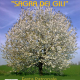 Sagra di Sant'Egidio a Rubiana (TO) 29-30 ago 2020